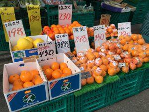 横浜中央卸売市場横やさいのぴこ柑橘祭り