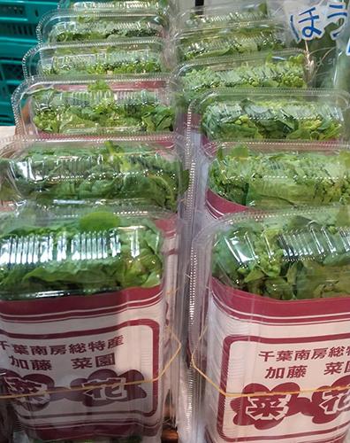 ぴこ青葉店・春野菜も続々登場!