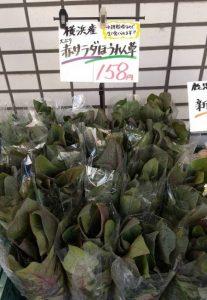 ぴこ青葉店・春の野菜が続々登場!