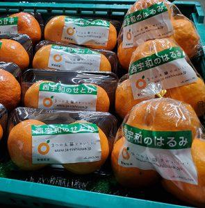 春は柑橘♪